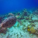 Grand Cayman Reef Dive 12/30/2015