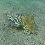 Photo de Daivoon Diving Center