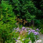 Det er mange vakre blomster i hagen på Bjerkebæk. Foto: Ian Brodie.