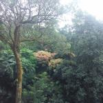 Asomewe place... middle of the Forest... Do visit when ur planning for coorg.
