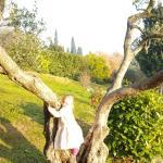 Landscape - Corte San Mattia - Agriturismo Verona Photo