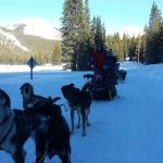 Photo de Monarch Dog Sled Rides