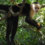 friendly monkey near hotel