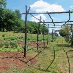 Monticello veggie garden