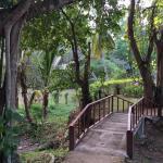 Royal Ping Garden & Resort Foto
