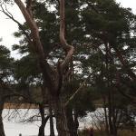 Frensham Little Pond