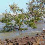 Árvores crescendo em meio ao mar agitado!