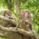 Takasakiyama Natural Zoo