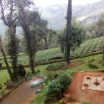 valley / tea garden view from room