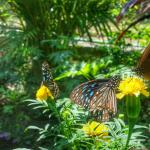 Kep Butterfly Farm