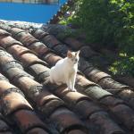 Gatos por los jardines del hotel