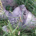 Oakwood; fallen marker