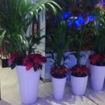 ロビーにあったきれいな花