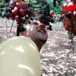 grape farm