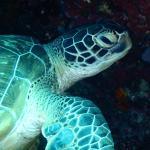 Thalassa PADI Dive Resort Foto