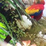 Macaw - from San Pedrillo tour