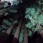 Redwood pod
