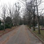 Photo of Kerepesi Cemetery