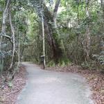 Gumbo Limbo Trail Foto