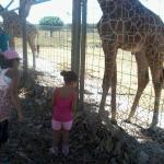 con la jirafa