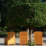 Orange tree in the Parc El Harti