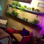 The social area with aquaponics - a fish tank is the water reservoir with fish waste plant food