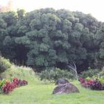 Foto de Hawaii Island Retreat at Ahu Pohaku Ho`omaluhia