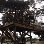 Another view of treehouse