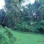View from bird cabana