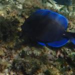 Foto di Coconut Tree Divers