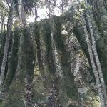 Wairere Boulders Foto
