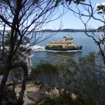 Ferry returning from Mossman Wharf, viewed from Cremorne Reserve