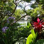 View of Mossman Bay from within Lex and Ruby's garden