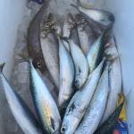 Cooinda Fishing Charters