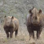 Photo de Rhino River Lodge