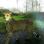 Foto de Dierenpark Planckendael