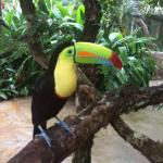 Toucan in Club Rio