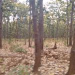 Jungles of Netarhat