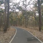 Roads amidst nature