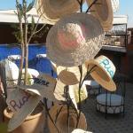"""Hauseigener """"Hutbaum""""....der perfekte Sonnenschutz :-)"""