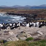FIGAS plane and penguins on Pebble Island