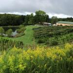 MountainRose Vineyards