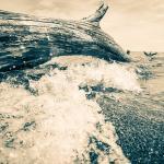 Waves on Log