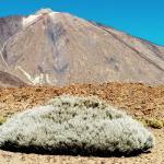 In der Caldera mit Blick auf den Teide