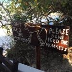 Photo of Red Mokey Lodge