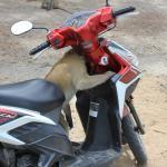 Affe untersucht unseren Roller