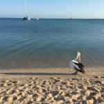 Monkey Mia Dolphin Resort Foto