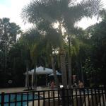 Hilton Grand Vacations at SeaWorld Photo