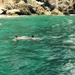 Dolphin encounter in the Virgin Islands