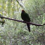 Otorohanga Kiwi House & Native Bird Park Foto